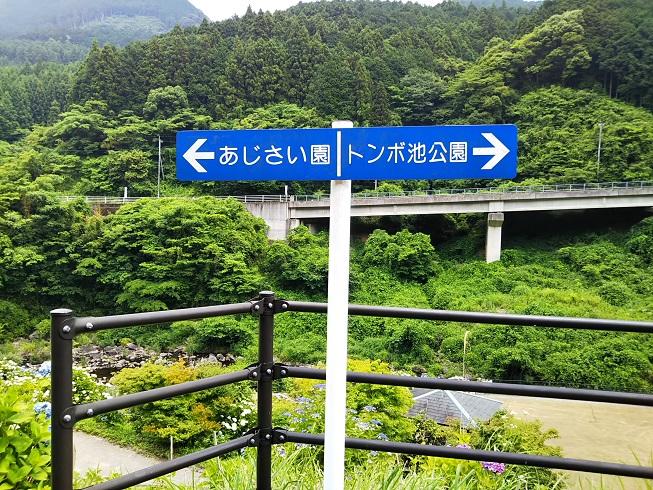 標識 右トンボ池 左あじさい園
